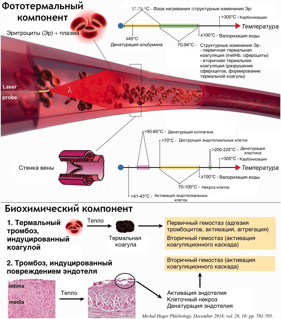 Троксерутин капсулы отзывы при варикозе